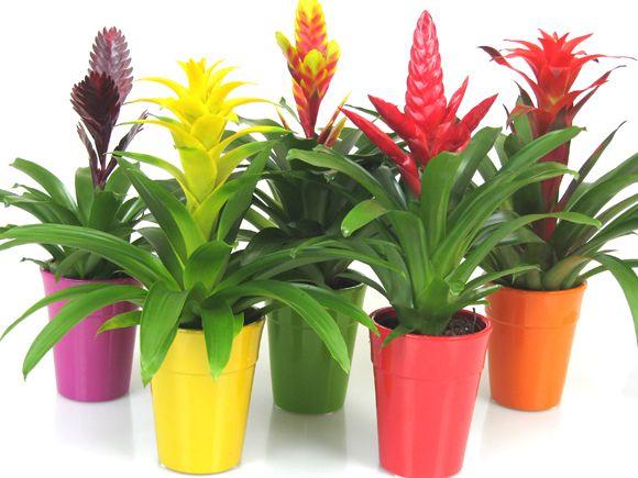Mejores plantas de interior ii poda y jard n - Plantas para macetas exterior resistentes ...