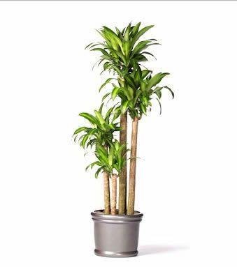 Mejores plantas de interior ii poda y jard n - Arboles de interior con poca luz ...
