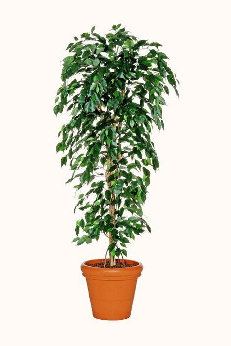 Plantas para oficina las mejores plantas para tu centro - Plantas de interior para salon ...