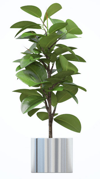 Mejores plantas de interior ii poda y jard n for Abono para plantas de interior