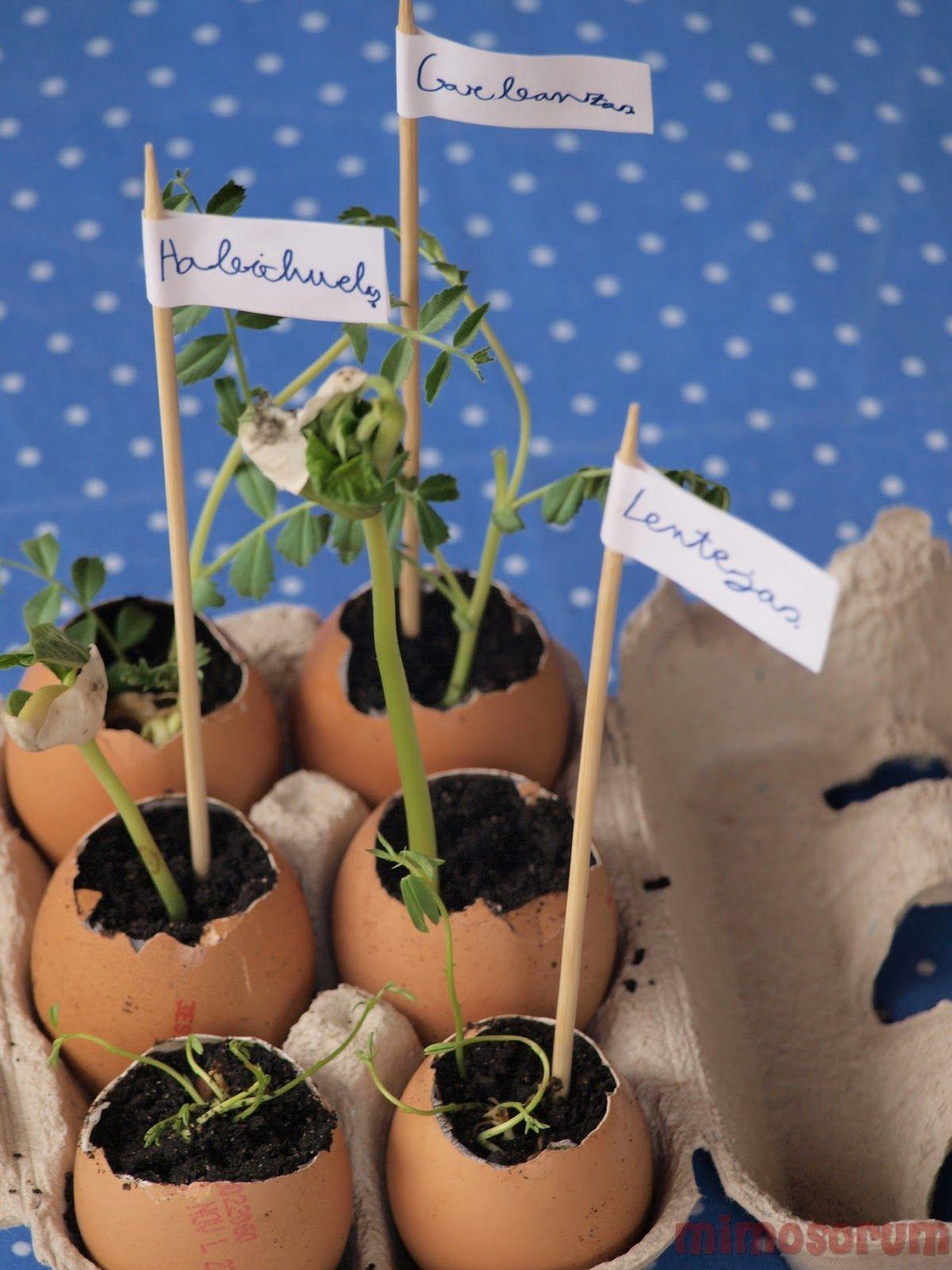 Jardinería Para Niños (y adultos)