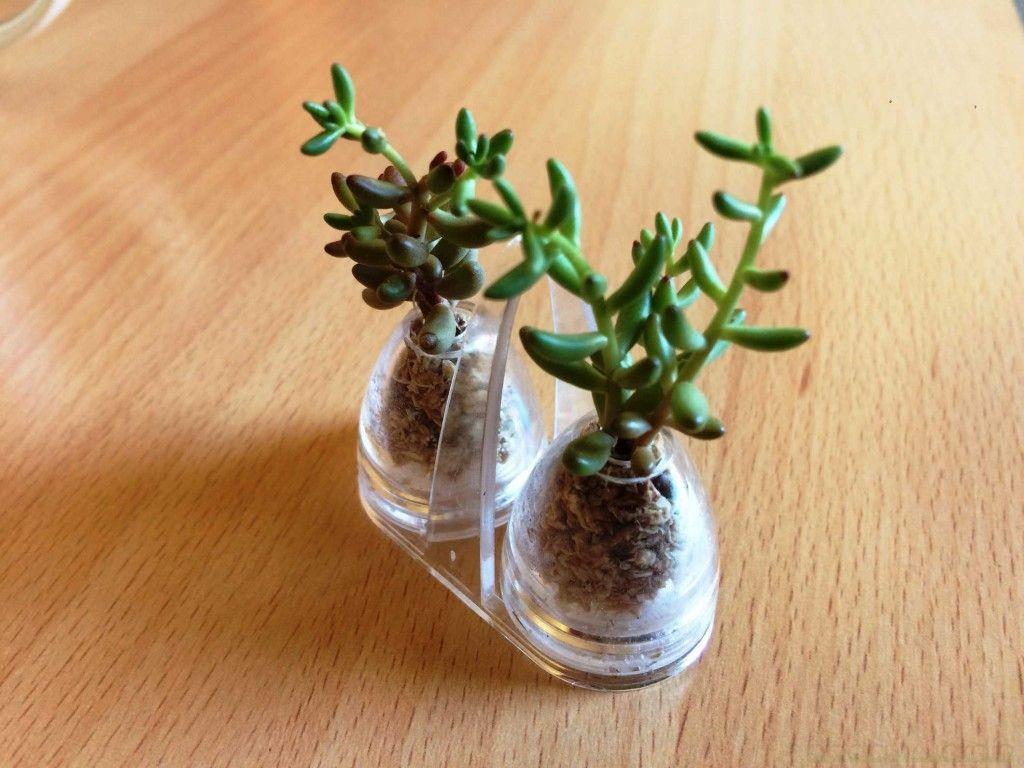 micro terrarium coolest