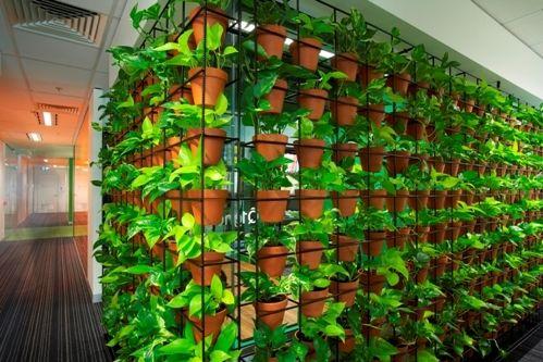 plantas en oficinas