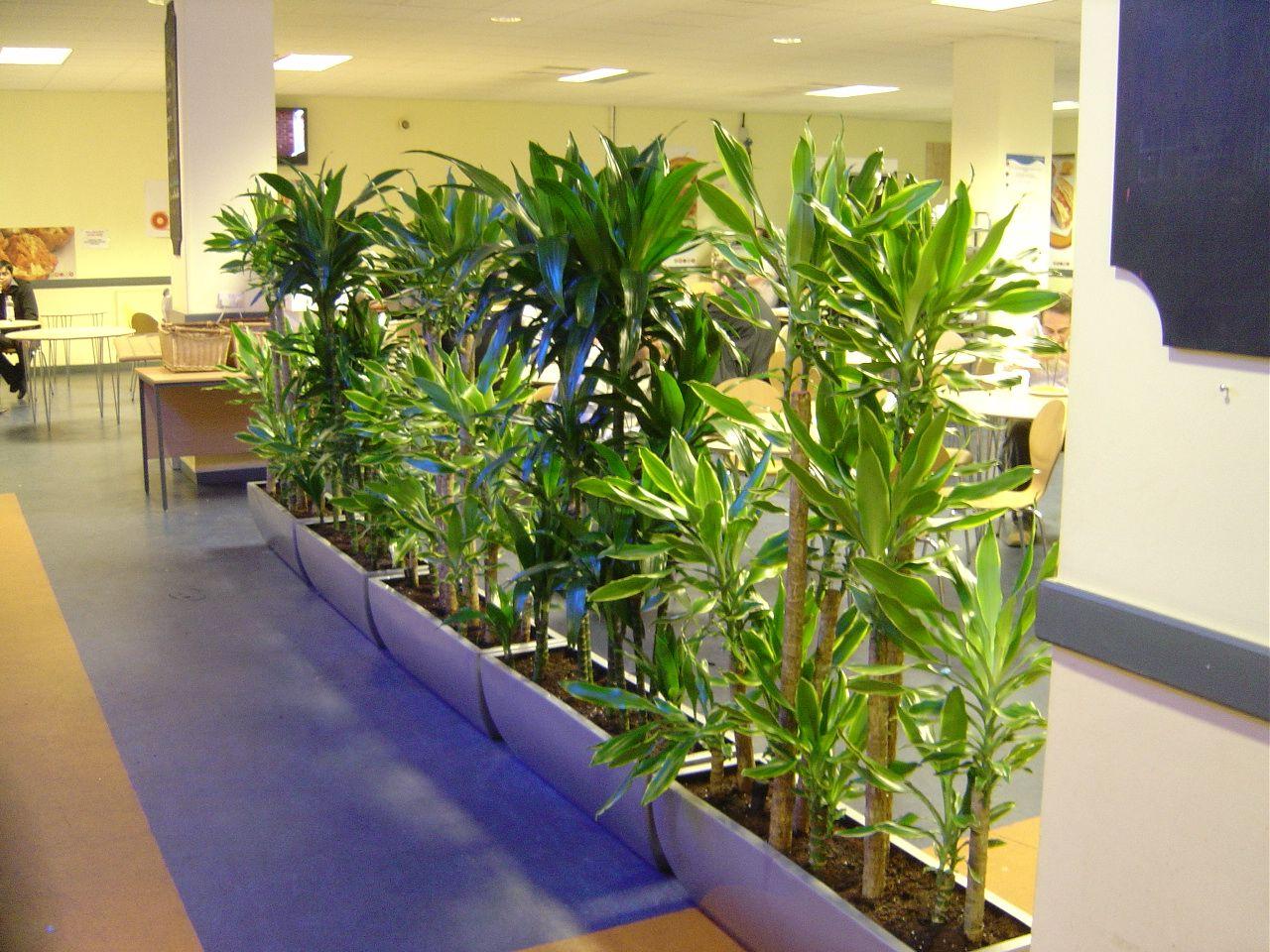 plantas en oficinas Madrid