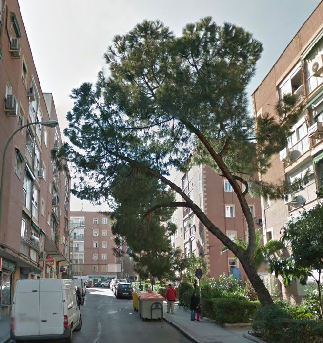 empresa de poda de árboles