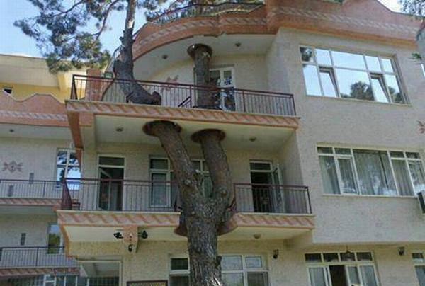proteger árbol