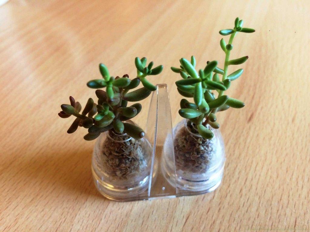 tiny terrarium mini terrarium