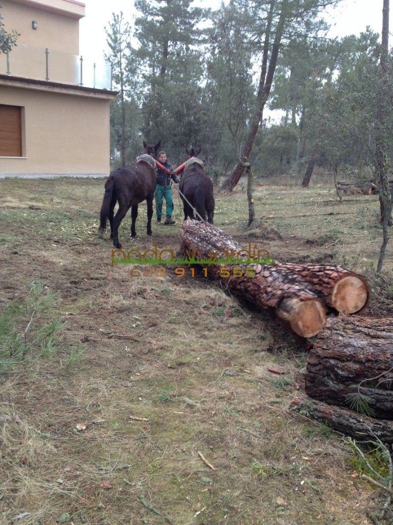 trabajo forestal 2